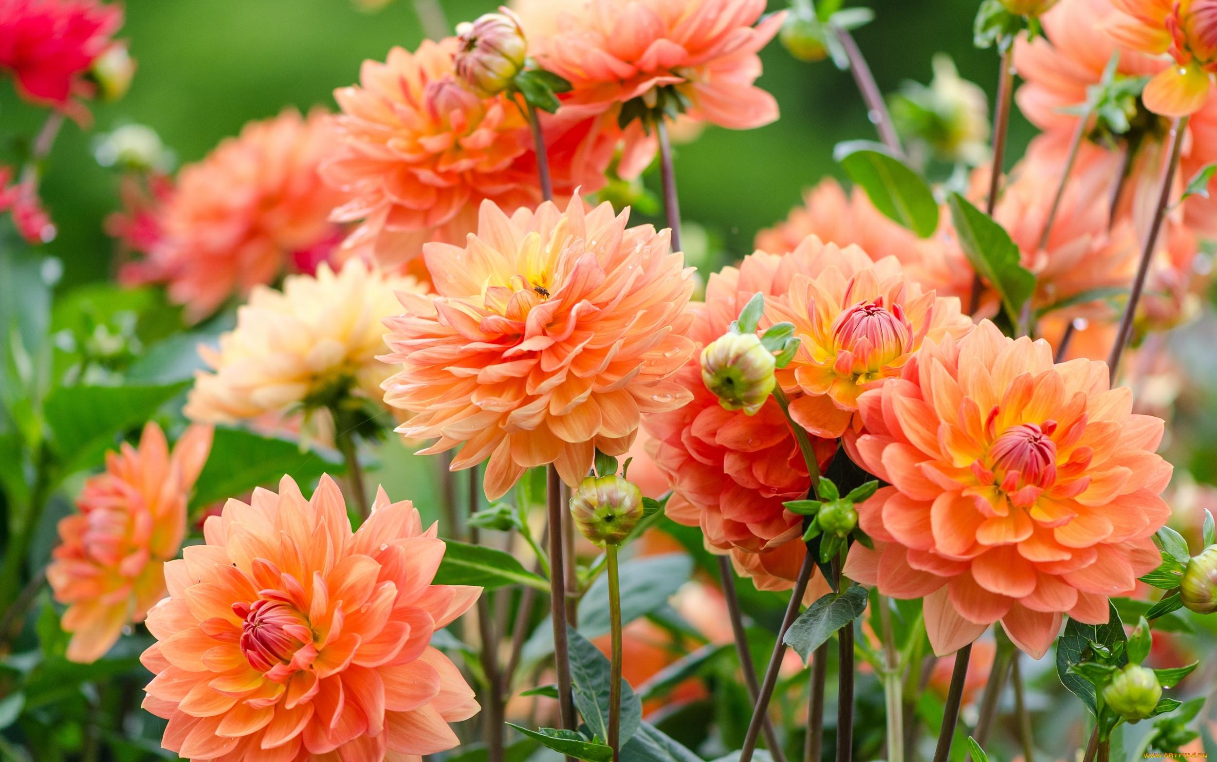 Картинка цветок осени
